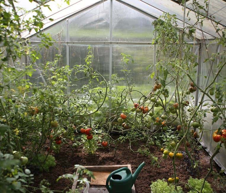 What is Organic Gardening? and What are the Benefits?